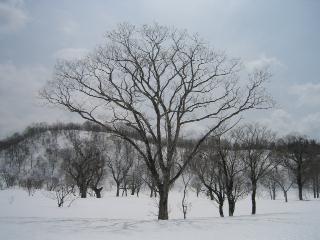 和田山牧場