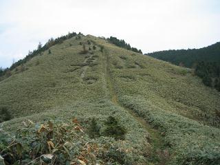 「泉山」の刈り込み