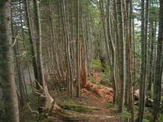 稜線の森林