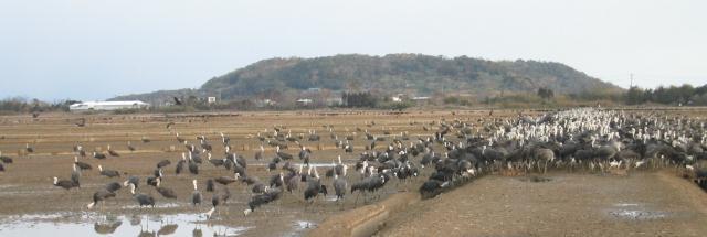 鶴の飛来地