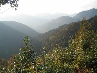 林道方面を望む