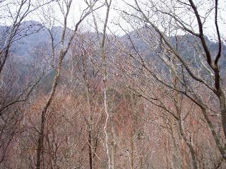 茶臼山・笠捨山・笠捨山東峰